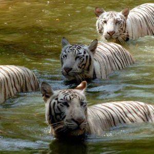Short And Sweet Tour Of  Memorable Sundarbans And Kolkata (Ex-Kolkata)