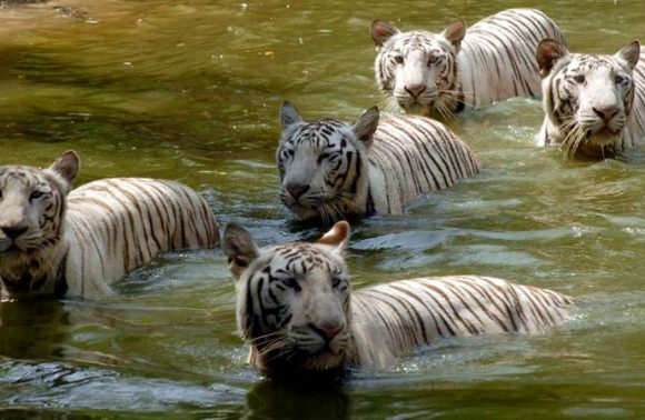 Short And Sweet Tour Of  Memorable Sundarbans And Kolkata (Ex-Kolkata)